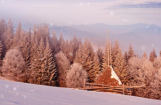 Sonnige morgenszene im bergwald. helle winterlandschaft im verschneiten wald Kostenlose Fotos