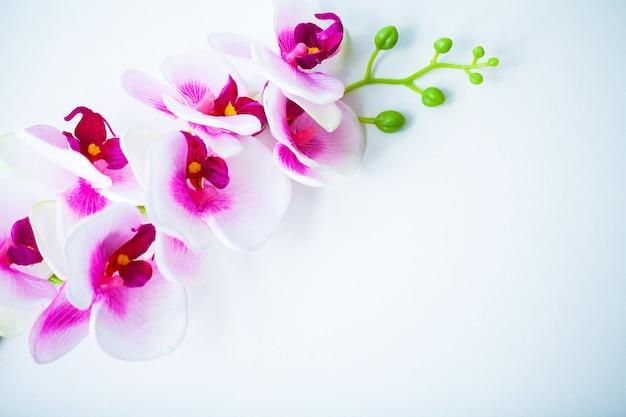 Spa- und wellness-szene. orchideenblume auf dem hölzernen pastell Premium Fotos