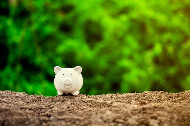 Sparschwein aus den grund. Premium Fotos