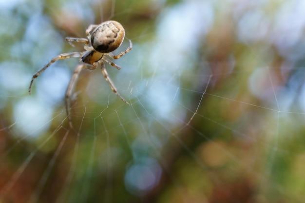 Spinne auf seinem netz hinter einem grünen hintergrund Kostenlose Fotos