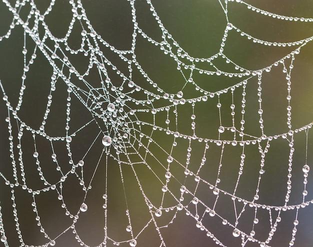 Spinnennetz mit verschwommenen regentropfen; nahansicht. Premium Fotos