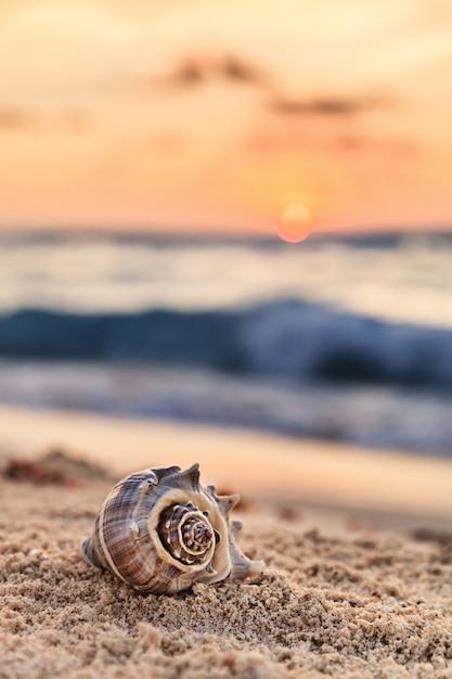 Spiral shell auf sandy tropical beach bei sonnenaufgang in mexiko, vertikale zusammensetzung Premium Fotos