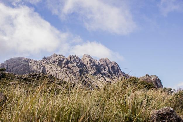 Spitze der schwarzen nadeln itatiaia Premium Fotos