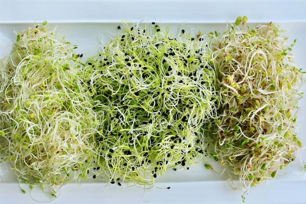Sprießen sie alfalfa, zwiebeln und mischen sie salate Premium Fotos