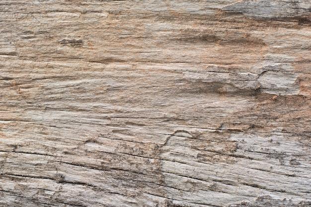 Spuren von termiten fressen holz Premium Fotos