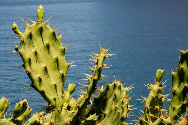 Stachelige kaktusblätter mit dem meer Kostenlose Fotos