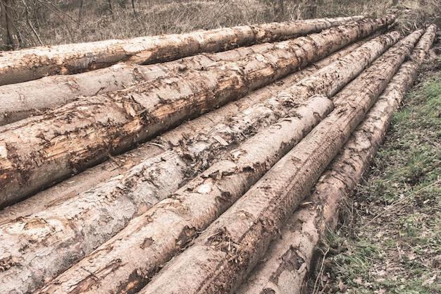 Stapel von baumstämmen in einem wald - entwaldungskonzept Kostenlose Fotos