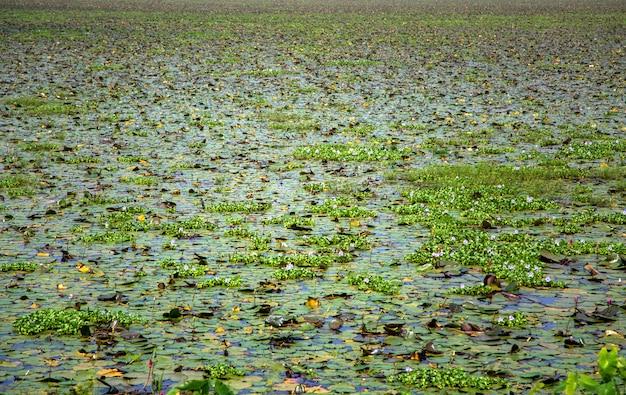 Stauwasser in kerala, indien Premium Fotos