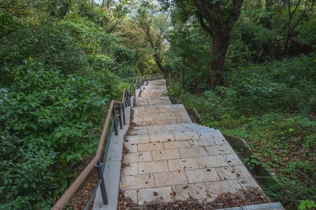 Steinschritt oder treppe, gehweg im grünen wald Premium Fotos
