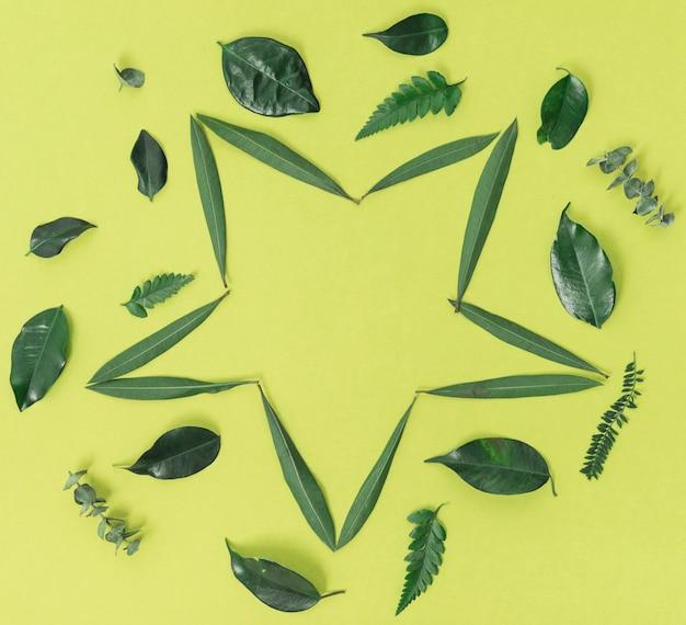 Sternform grüne blätter Kostenlose Fotos
