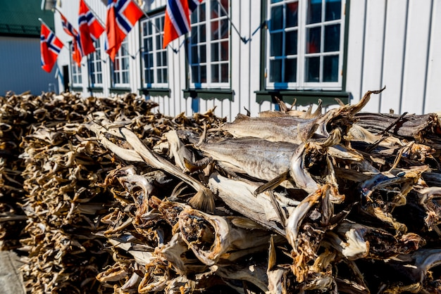 Stockfisch, getrocknet durch kalte luft und wind am fischereihafen norwegen Premium Fotos
