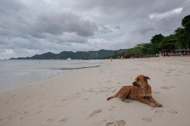 Strand der tropischen insel. der hund auf sand, wolken. Kostenlose Fotos