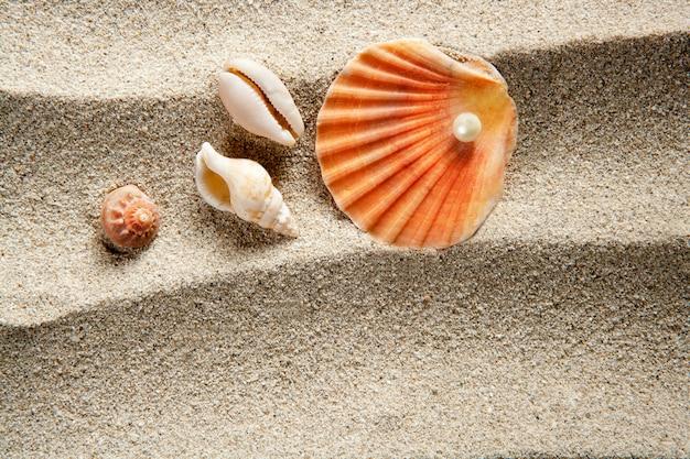 Strandsandperlenmuschelsommerferien Premium Fotos