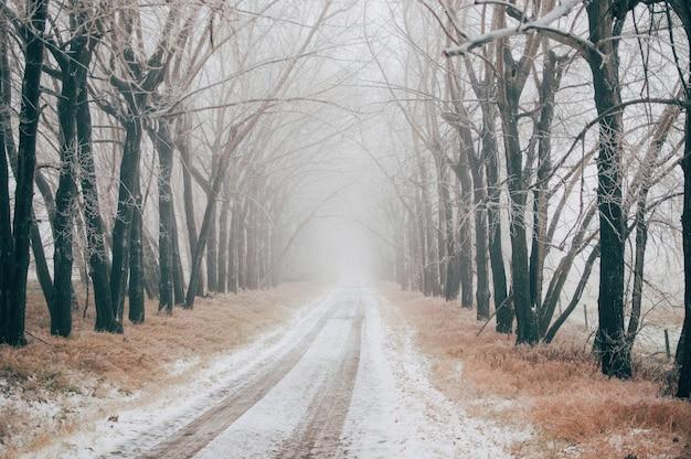 Straße bedeckt mit schnee zwischen den kahlen bäumen an einem nebligen wintertag Kostenlose Fotos