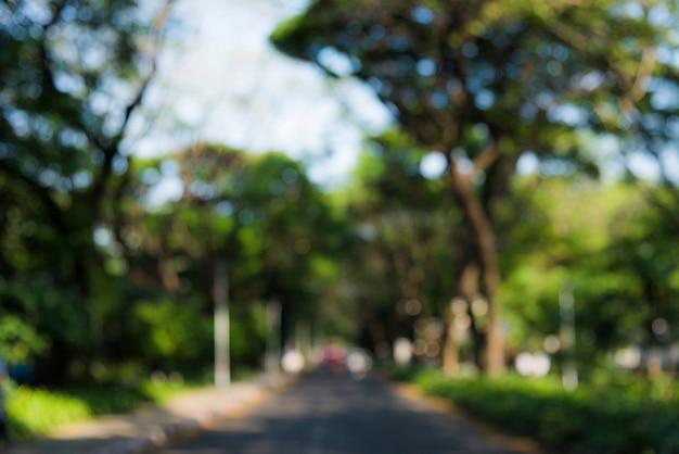 Straße, die einen park durchläuft Kostenlose Fotos