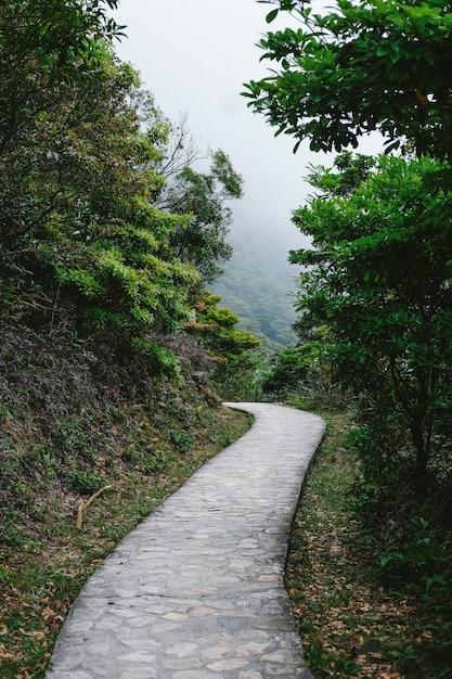 Straße, die zu den regenwäldern führt Kostenlose Fotos