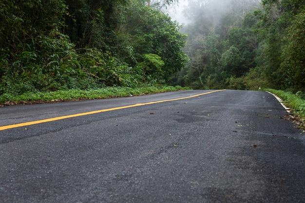 Straße herein mit naturwald und nebeliger straße des regenwaldes Premium Fotos