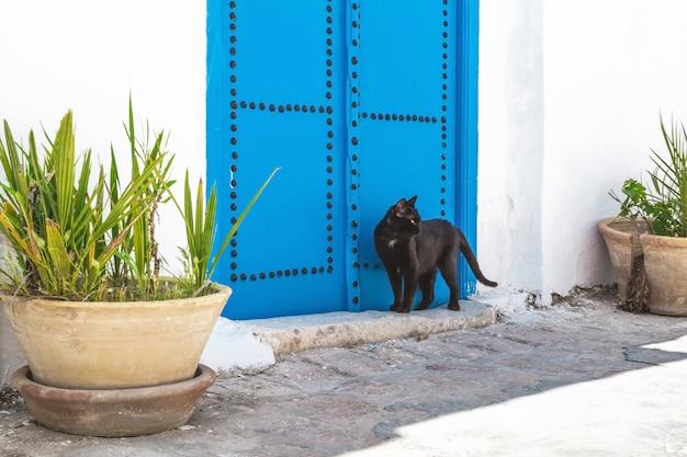 Straßen von sidi bou said, tunesien. schwarze katze in der nähe des hauses. Premium Fotos