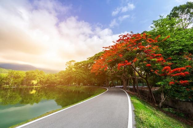 Straßenlandschaftsansicht und tropische rote blumen Premium Fotos