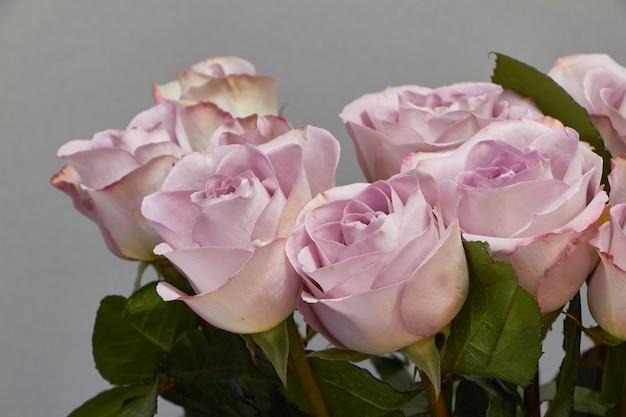 Strauß blühender rosa rosen auf einem rosa, Premium Fotos