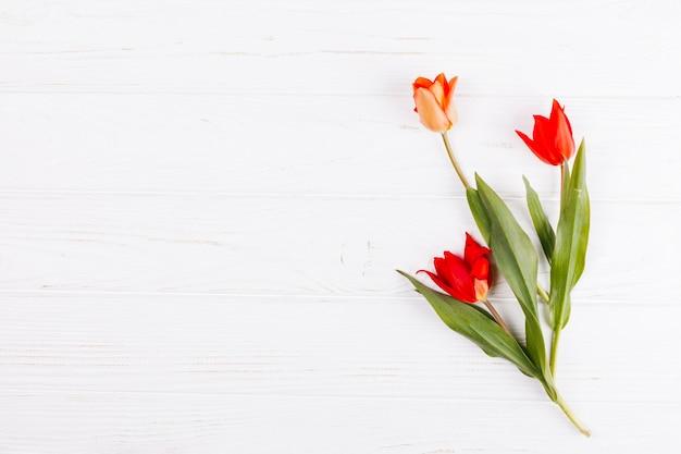 Strauß tulpe blumen Kostenlose Fotos