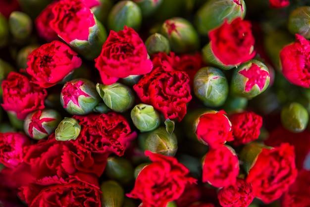 Strukturierter hintergrund der roten gartennelkenblumen Kostenlose Fotos