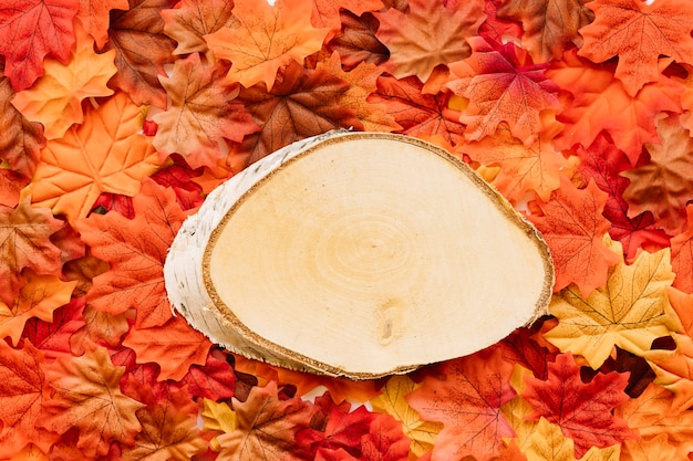 Stück birkenbaum, der auf blätter legt Kostenlose Fotos