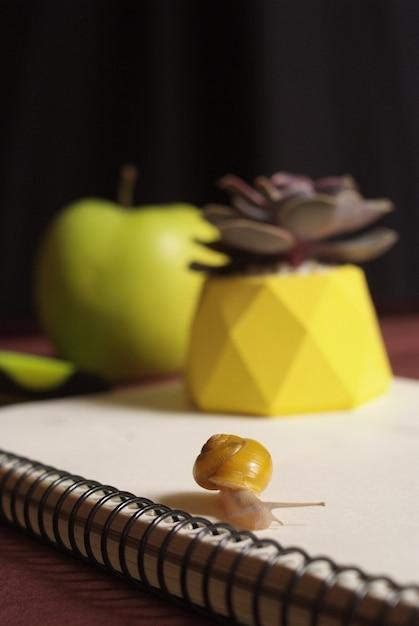Succulents im gelben konkreten topf auf tabelle mit kleiner schnecke nahe apfel und notizbuch. makro nahaufnahme Premium Fotos