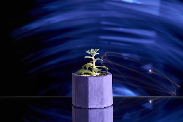 Succulents im violetten konkreten topf auf blaulichthintergrund. sauberes foto Premium Fotos