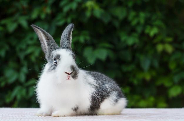 Süßes kleines flauschiges kaninchen. hase ist ostersymbol. Premium Fotos