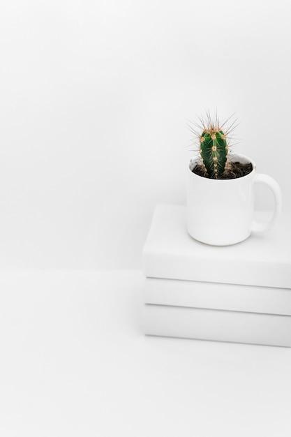 Sukkulente im topf auf gestapelt von den büchern gegen weißen hintergrund Kostenlose Fotos