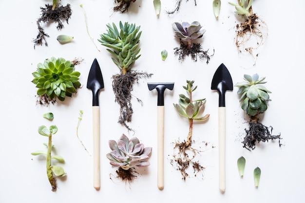 Sukkulente pflanzen Premium Fotos
