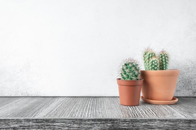 Sukkulenten in keramiktöpfen. konzept des innengartenhauses - bild Premium Fotos