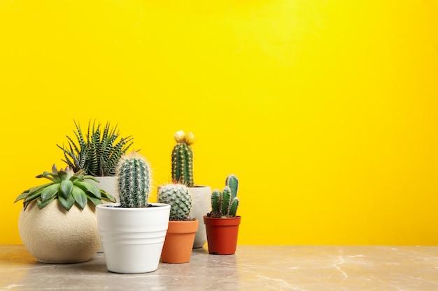 Sukkulenten in töpfen gegen gelbe oberfläche. zimmerpflanzen Premium Fotos