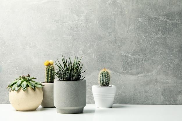 Sukkulenten in töpfen gegen graue oberfläche. zimmerpflanzen Premium Fotos