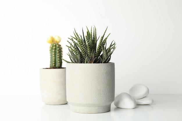 Sukkulenten in töpfen und steinen auf weißer oberfläche Premium Fotos