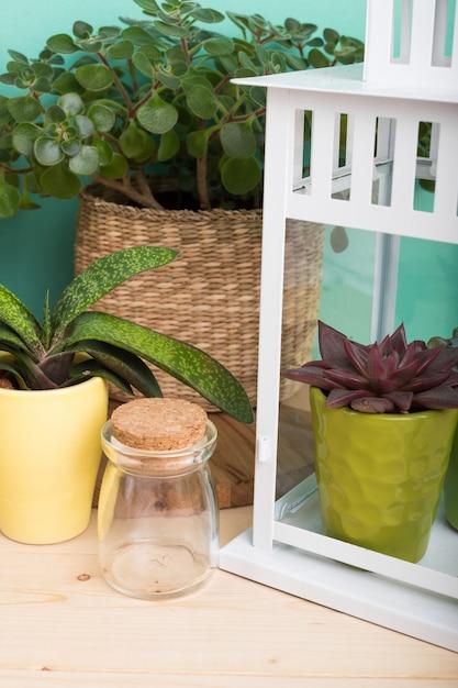 Sukkulenten, zimmerpflanzen in töpfen Premium Fotos