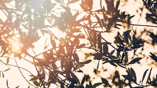 Sun, der durch niederlassungen von bäumen im wald scheint Kostenlose Fotos