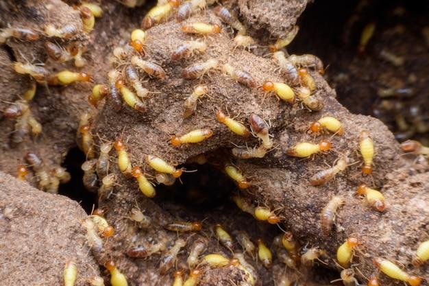 Supermakrobild der horde der termiten, die ihr nest errichten Premium Fotos