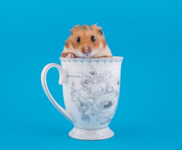Syrischer hamster, der aus einer teeschale heraus lugt Premium Fotos