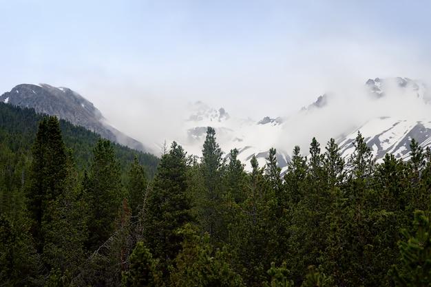 Szenische ansichten des schweizer nationalparks mit einer straße am sonnigen frühlingstag. Premium Fotos