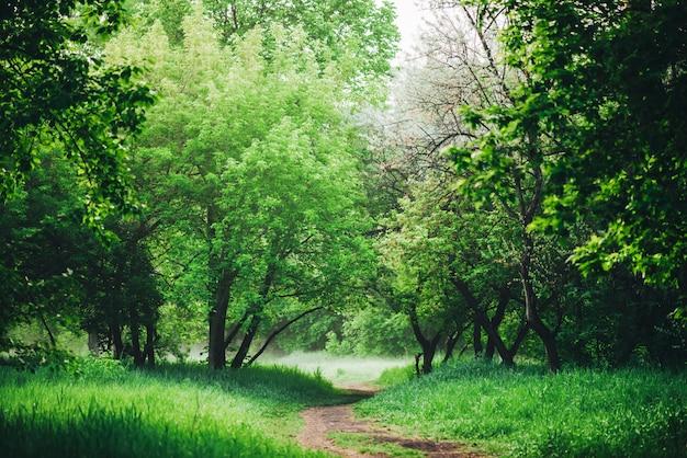 Szenische landschaft mit schönem üppigem grünem laub. Premium Fotos