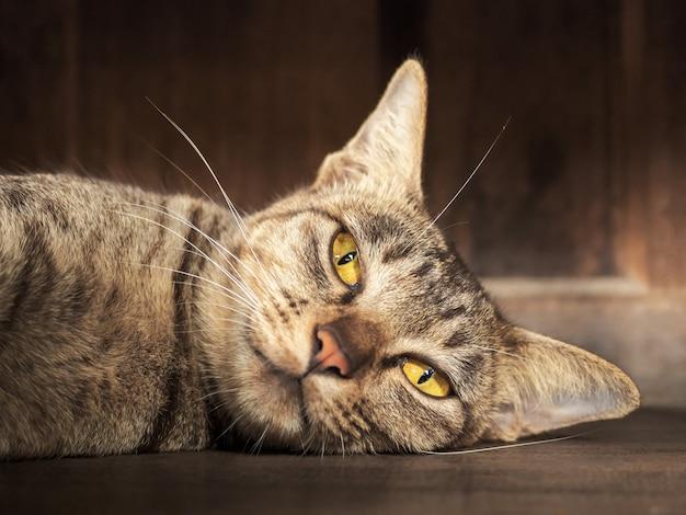 Tagesschlafen der gestreiften grauen katze Premium Fotos