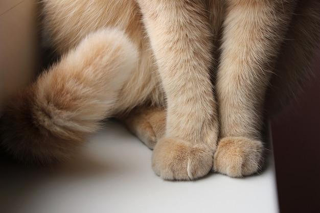Tatzen und endstück einer roten katze, die auf der fensterbrettnahaufnahme sitzt. Premium Fotos