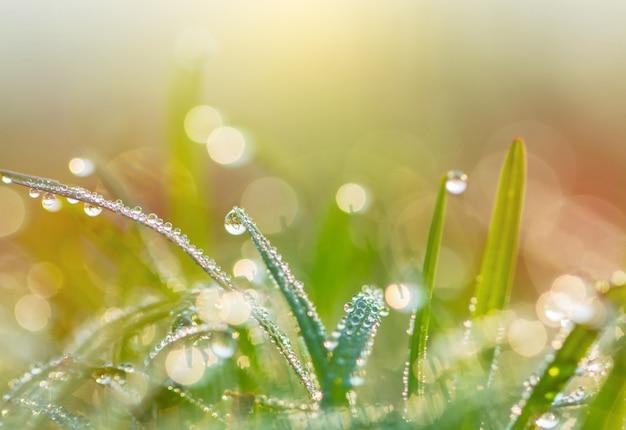 Tautropfen auf grünem gras Premium Fotos