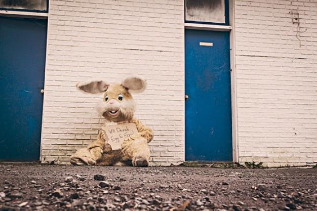 Teddy kaninchen fragen für lebensmittel Kostenlose Fotos