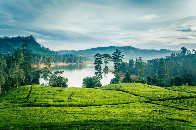 Tee estates morgens in sri lanka nahe sri pada-berg Premium Fotos