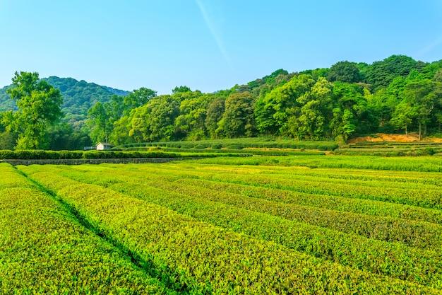 Teegarten frische kulturlandschaft Kostenlose Fotos