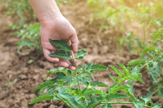 Teen mädchen berührt hände mit grünen pflanzen im garten Premium Fotos