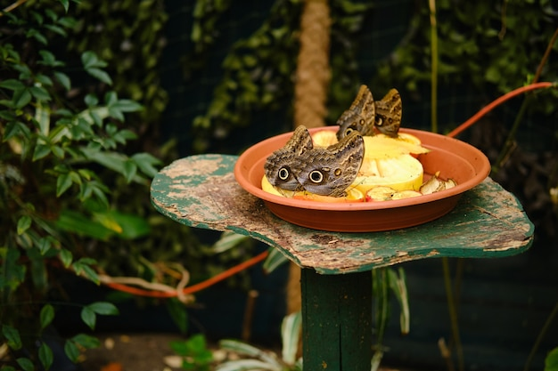 Teller voller früchte mit eulenschmetterlingen, umgeben von viel grün unter dem sonnenlicht Kostenlose Fotos